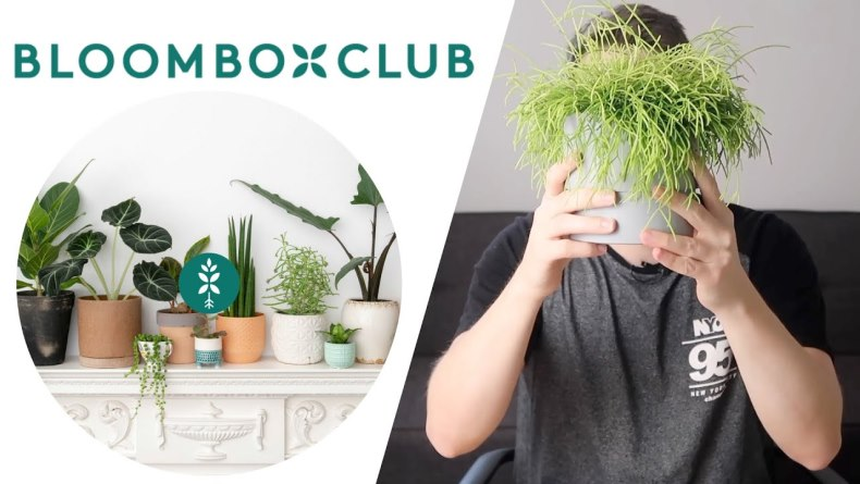 Bloombox Club is the best place to order flowers online in UK