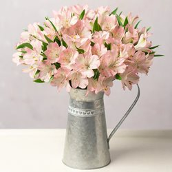 Simply Alstroemeria - Any Occasion
